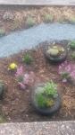 herbs_Angel_Community_Garden_Tonbridge